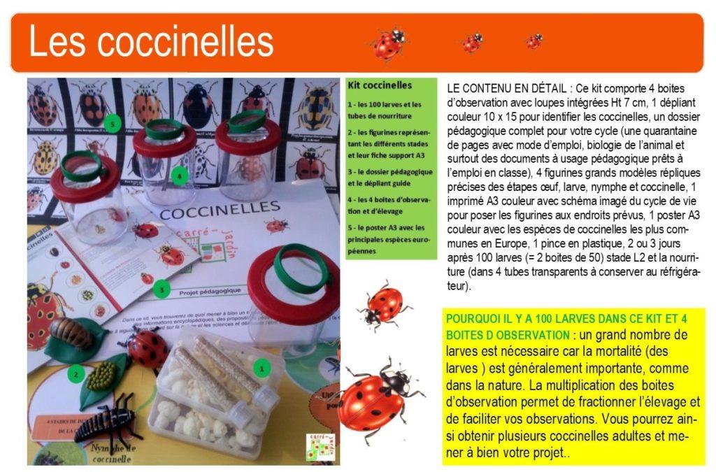kit coccinelles école