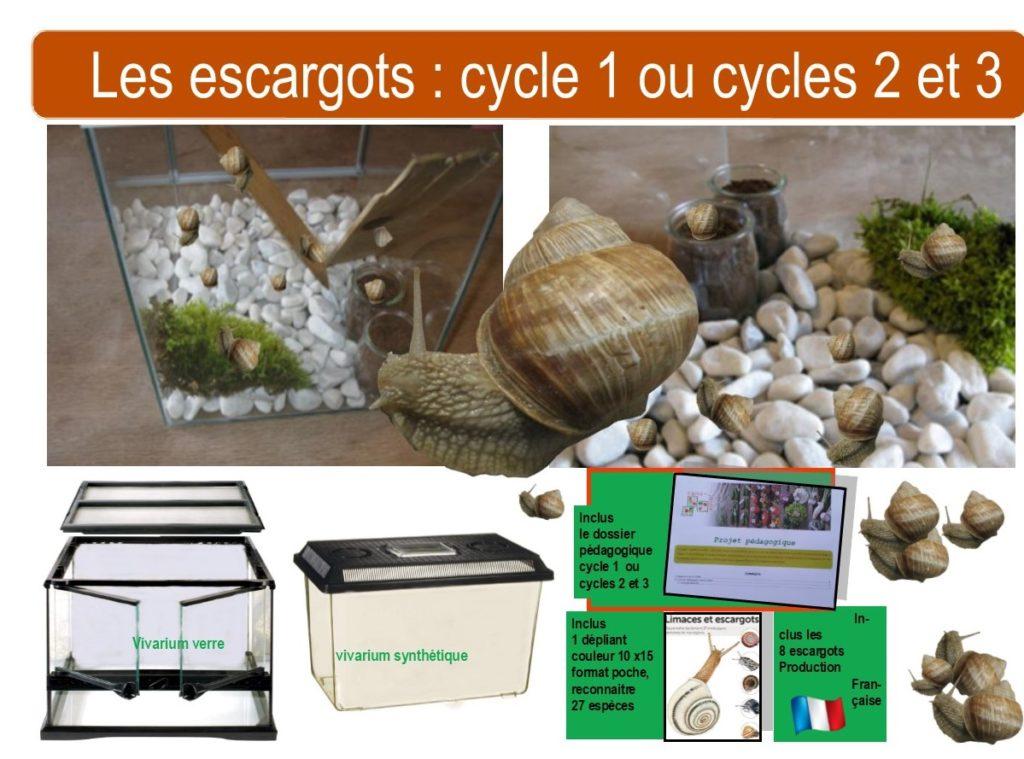 kit escargots école