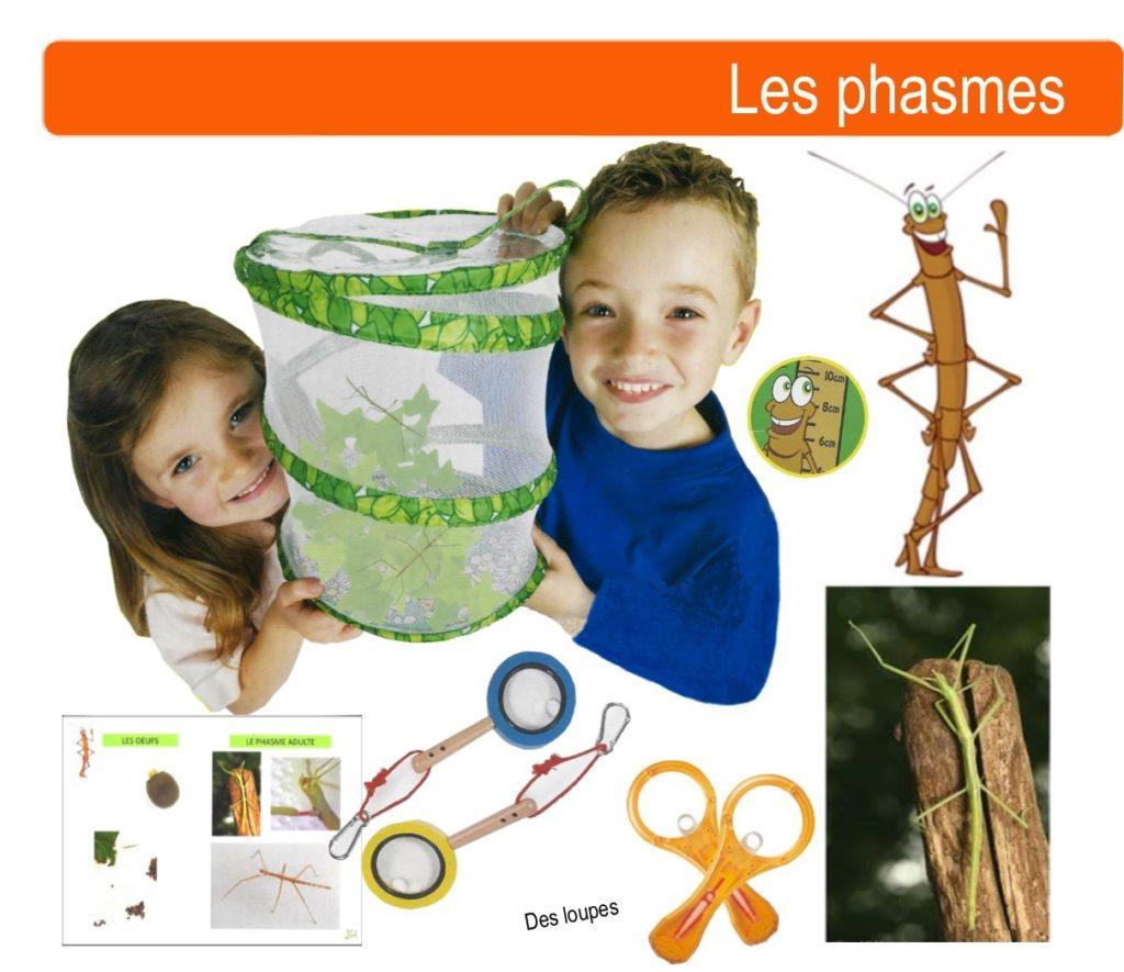 kit phasme école